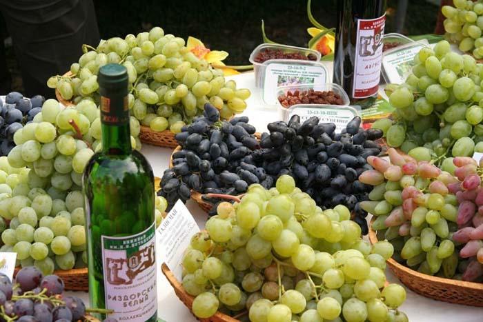 В музее виноградарства